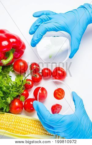 Research of various vegetables in the laboratory on GMOs and harmful substances.
