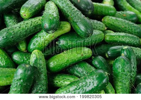 Fresh green cucumbers in a box in the market.