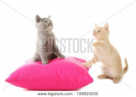 Ginger And Grey Kitten With Pillow Isolated On A White