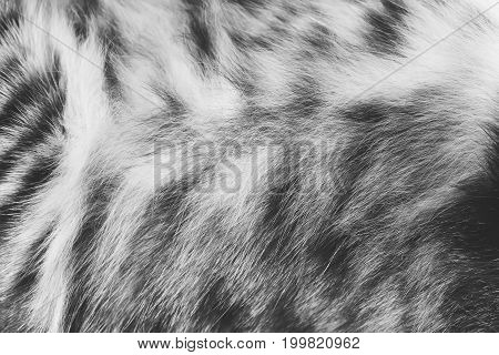Background texture striped cat fur wool close up black and white photo