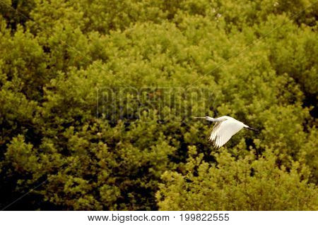 Stork flies behind is the Forest photo
