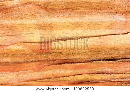 the wood background texture split beech stump