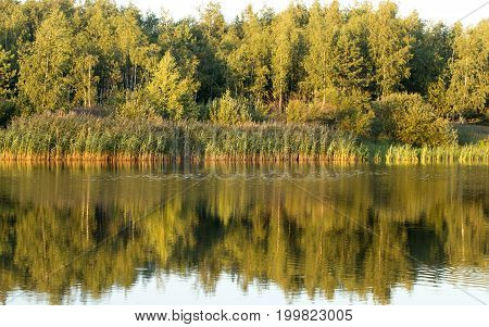 Lake in the forest under the sun affectionate at sunset of the day