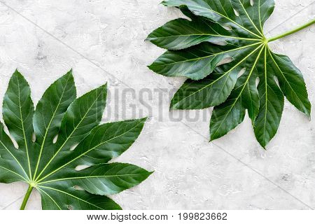 big jungle leaves on light grey background top view.