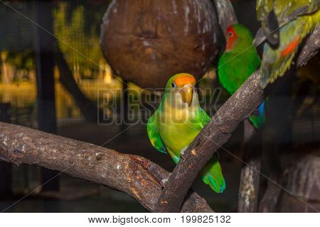 Colorful Parakeet Birds In The Twilight