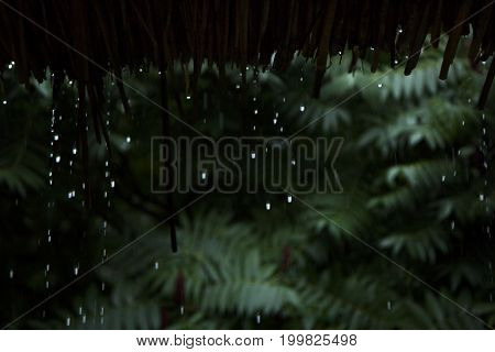 rain drops falling down the from bamboo roof