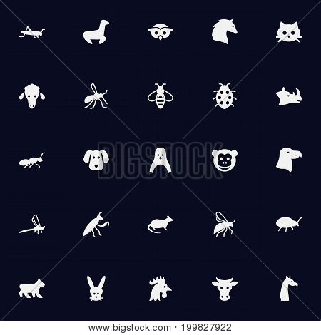 Collection Of Damselfly, Bug, Bumblebee And Other Elements.  Set Of 25 Animal Icons Set.