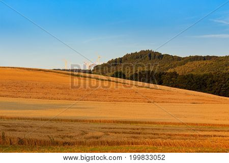 Fields of wheat in saturated orange color woods and wind turbines under a blue sky. Landscape picture near Koblenz Rhineland-Palatinate (Rheinland-Pfalz) Germany.