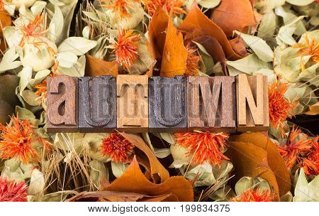 Autumn text with a colorful fall background