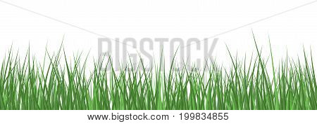 Vector realistic detailed grass seamless pattern isolated on white background