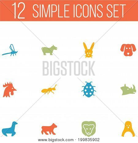 Collection Of Herculeanus, Damselfly, Rhinoceros And Other Elements.  Set Of 12 Zoo Icons Set.