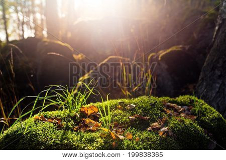 Stone In Forest Covered With Moss. Sun Flare At The Backlit
