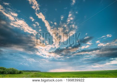 Countryside Rural Field Landscape Under Scenic Spring Blue Cloudy Dramatic Sky With White Fluffy Clouds. Skyline. Agricultural Landscape Of Green Young Wheat.