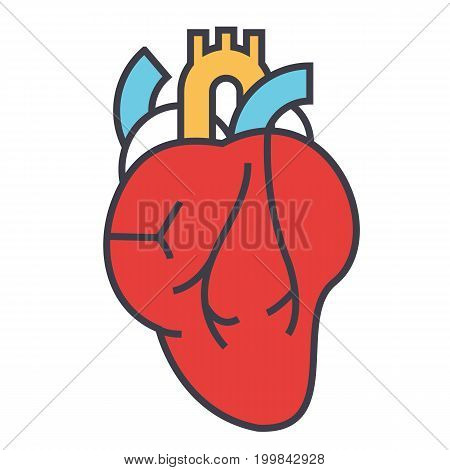Heart anatomy, cardiology concept. Line vector icon. Editable stroke. Flat linear illustration isolated on white background