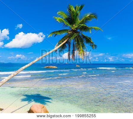 Scene Coast Palms