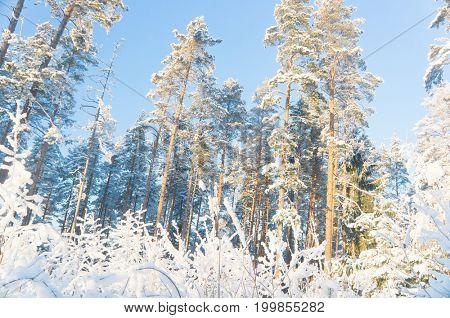 Frosty Glow Under Blue Skies