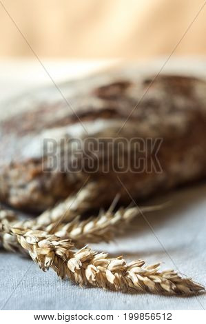 Ears of wheat and whole grain bread in background