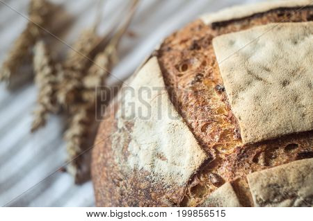 Fresh sourdough bread and ears of wheat close up