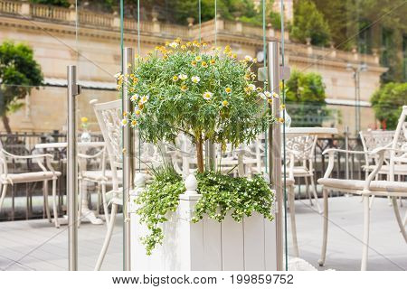 Green potted plants outdoor in street cafe