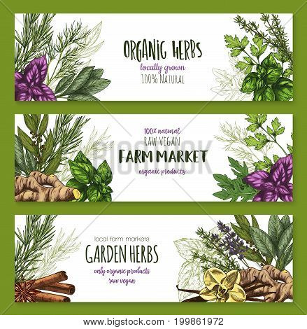 Organic herb and spices farm market banner set. Basil, mint, parsley, rosemary, thyme, dill, cinnamon, bay leaf, ginger, vanilla, anise, sage and lavender sketch label for spice shop and food design