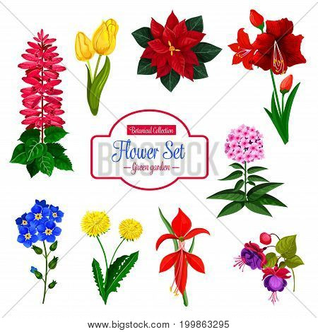 Flower, garden and house flowering plant isolated icon set. Tulip, lily, dandelion, forget me not, sage, phlox, poinsettia, fuchsia and amaryllis blooming branches with green leaf. Flower shop design