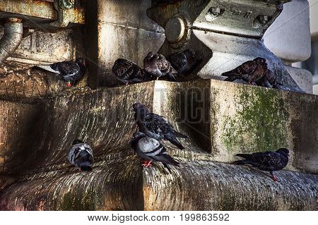 Pigeons roosting in old, grungy urban stonework. The picture is reflective of abandonment, filth, homelessness, depression, dystopia, grayness, grime and decay.