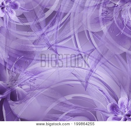 Floral violet beautiful background . Wallpapers of light violet. Flower composition. Nature.