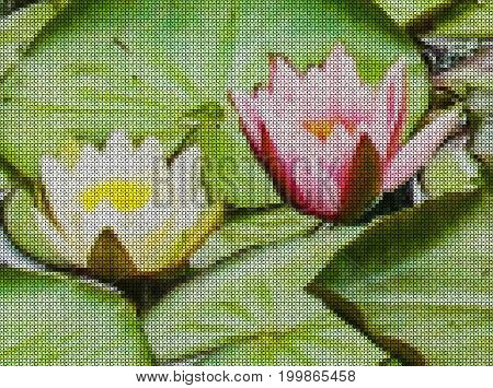 Illustrations. Cross-stitch. Beautiful flower of the water lily (nymphaeum) among the green leaves on the lake.