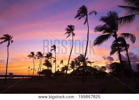 Colorful sunset at Waikiki beach in Hawaii USA. Tropical beach at sunset with pal grove against the skies.