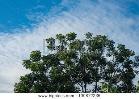 Sky Above The Bamboo Trees In The Forest