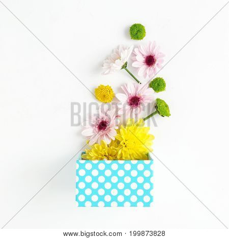 Flat lay birthday background. Open blue gift box with different chrysanthemums on white background. Top view