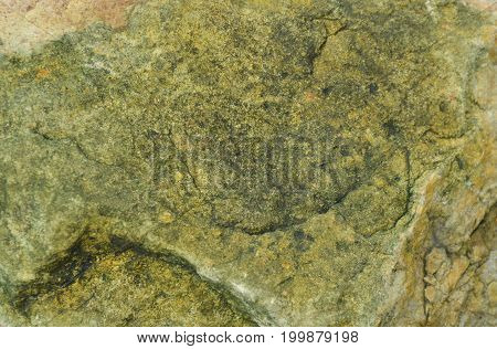 close up of rock in garden used for texture and background