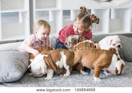 cute girl sitting on carpet and playing with puppies bulldog.