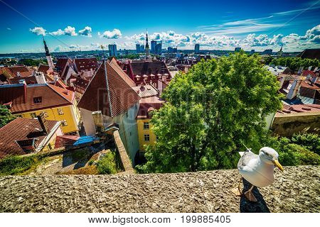 Tallinn, Estonia: aerial top view of the old town in summer