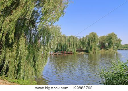 The picture was taken in Ukraine. The picture shows a lake in the middle of which a green island overgrown with weeping willows. A footbridge approaches the island.