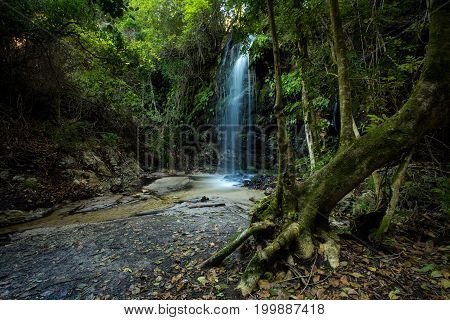 Water Tumbling Over A Small Waterfall In An Indigineous Forest In The Overberg  In South Africa