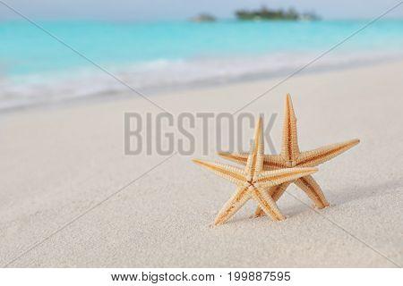 Starfish on beach sand at tropical resort