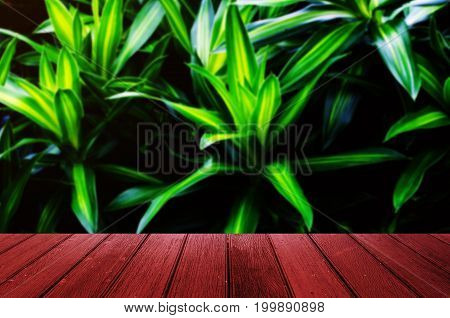 empty wooden floor or terrace with blurred image of dark green plant tropical leaf texture background beautiful nature pattern on dark background copy space for display of product presentation