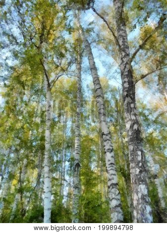 Tall Slender White Birch Forest.  Russian Spring Landscape Watercolor Illustration. Photo Manipulati