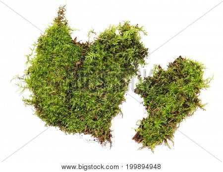 A Clump Of Green Moss Isolated On A White Background
