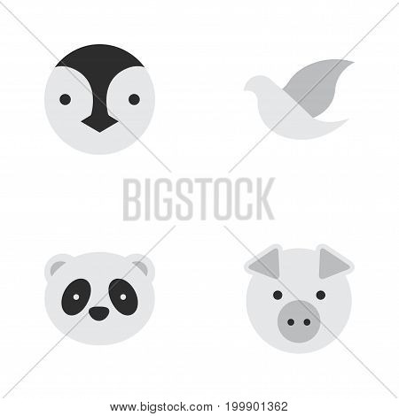 Elements Pigeon, Piggy, Flightless Bird And Other Synonyms Dove, Piggy And Animal.  Vector Illustration Set Of Simple Zoo Icons.