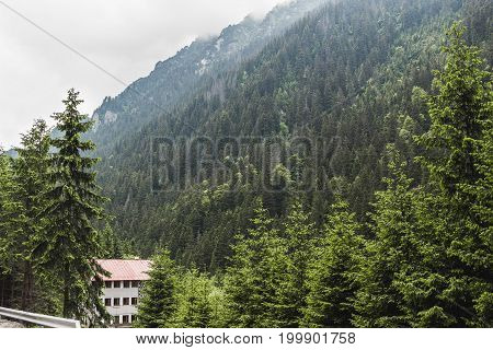 Carpathians nature landscape of Fagaras mountains with pine forest at Romania spectacular wilderness scenery.