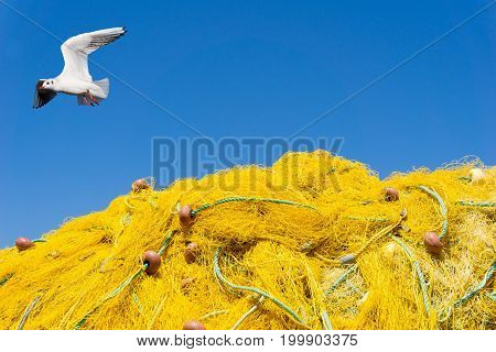 Close-up of a Seagull with outstretched wings above yellow Fishing Nets in front of a blue Sky. View on a Seagull above a Fishing net. Natural Backgrounds