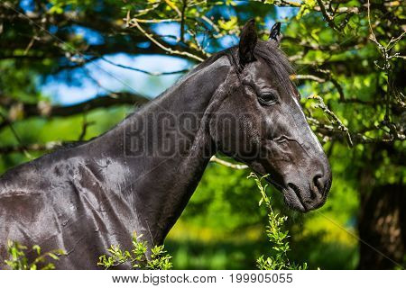 Portrait of the horse in the bush in summer