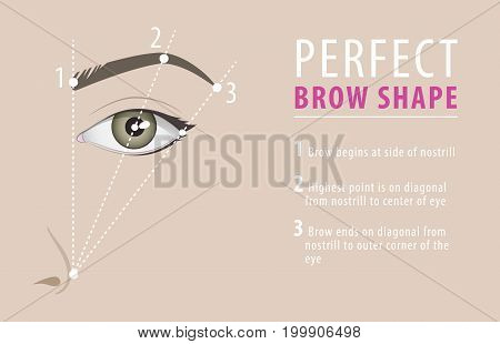 Perfect eyebrow shape tutorial. vector beauty template