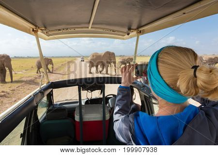 Woman on african wildlife safari, Amboseli national park, Kenya. Lady taking a photo of herd of wild african elephants with her smartphone. Open roof safari vehicle.