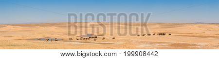 beautiful landscape of sunlit desert with camels