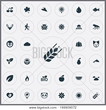 Elements Sun, Leafage, Solar Energy And Other Synonyms Apple, Seeds And Dolphin.  Vector Illustration Set Of Simple Ecology Icons.