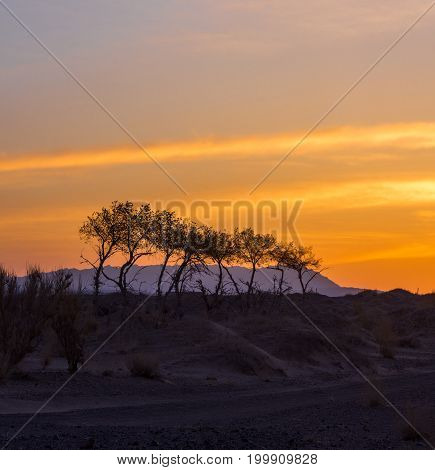 silhouettes of trees on hill with orange sky on background