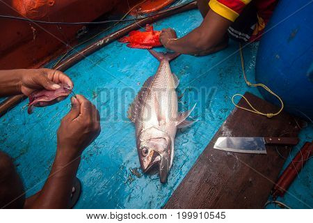 Fisherman Is Doing Hook Bait For Fishing While He Have Rusty Jobfish And Grouper Fish  On Fishing Bo